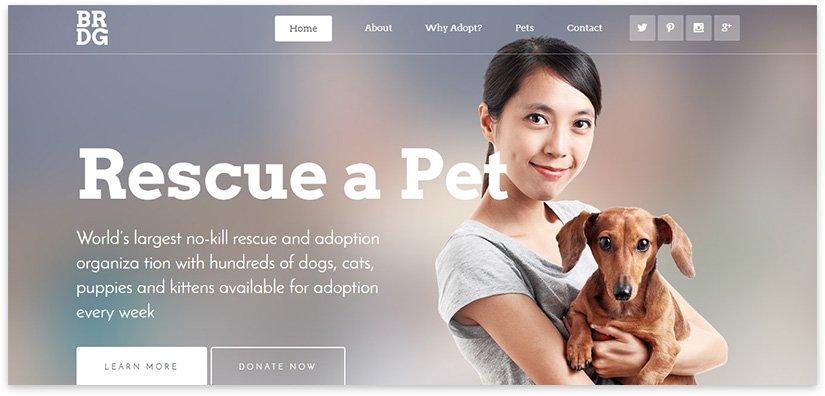 Сайт для животных