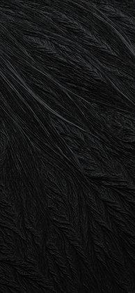 black-new-i-5s