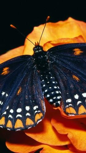 Макро бабочка