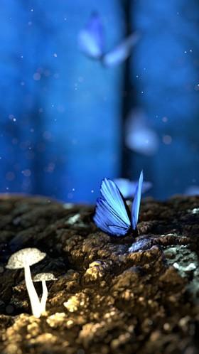Бабочка и грибы