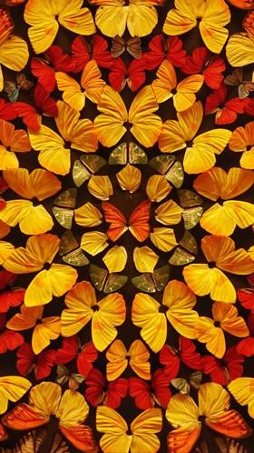 Узор из бабочек