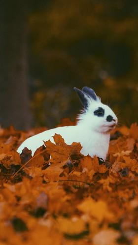 Кролик в листьях
