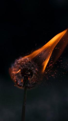 Одуванчик в огне