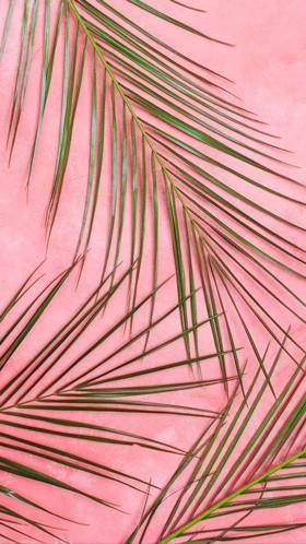 Пальмовые ветви
