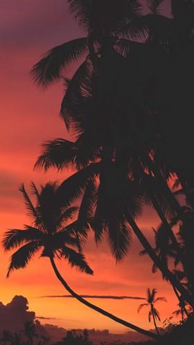 Пальмы на фоне красного заката